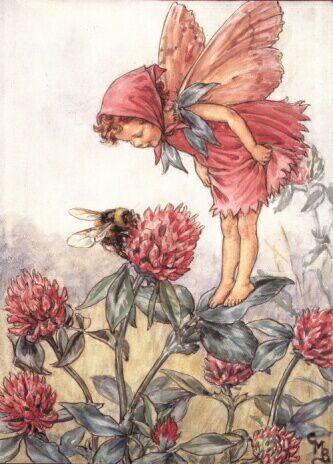 Red Clover Fairy by Cicily Mary Barker
